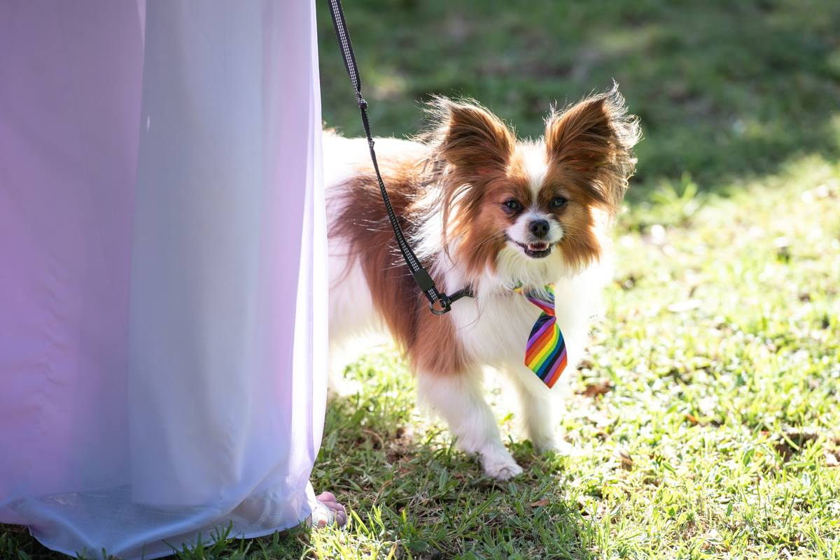 Page pup; pets at weddings
